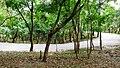 Kava - Anakkal Road in Forest, Palakkad - panoramio (4).jpg