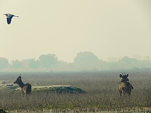 Keoladeo National Park - Keoladeo Ghana National Park, Bharatpur, Rajasthan, India