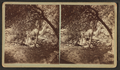 King Philip's Spring - East Base of Mt. Hope, from Robert N. Dennis collection of stereoscopic views 2.png