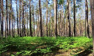 Wildlife of Ukraine