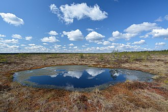 Bog - Precipitation accumulates in many bogs, forming bog pools, such as Koitjärve bog in Estonia