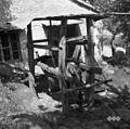 """Kravo podkujejo v """"štantu"""", Klun Jože, kovač, Misliče 1955 (2).jpg"""