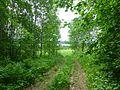 Kungursky District, Perm Krai, Russia - panoramio (145).jpg