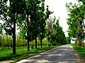 L409, Moldova - panoramio (2).jpg