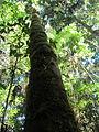 La Amistad Panama Biosphere Reserve - Parque Nacional Volcan Baru (a core zone) 35.JPG