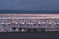 LakeBogoria.jpg