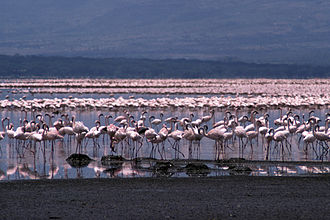 Great Rift Valley, Kenya - Lake Bogoria