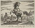 Landschap met paard uit Toscane. NL-HlmNHA 1477 53011505.JPG
