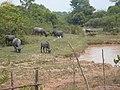 Lao PDR, Farm - panoramio.jpg