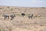 File:Lascar Nairobi National Park (4519260769).jpg