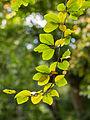 Leaves (8105218985).jpg