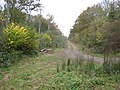 Legbourne Wood Nature Reserve - geograph.org.uk - 606944.jpg