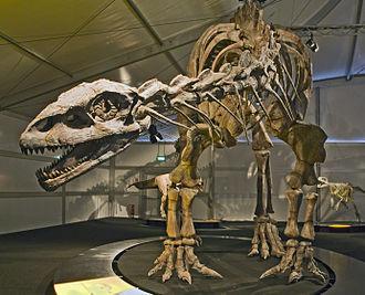 Lessemsaurus - Image: Lessemsaurus Senckenberg