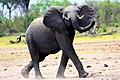 Look At Me Elephant (190898797).jpeg