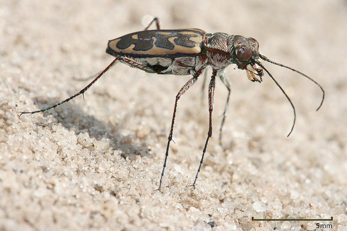 название жуков в картинках атлас определитель