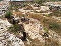 Mġarr cart ruts 18.jpg