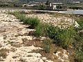 Mġarr cart ruts 24.jpg