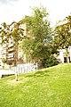 MADRID A.V.U. JARDIN-CINTA Dr. VALLEJO NAJERA - panoramio (10).jpg