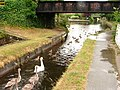 Make way - the swans are coming through! - geograph.org.uk - 212510.jpg