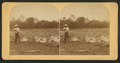 Man aiming gun at small alligator, from Robert N. Dennis collection of stereoscopic views.png