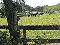 Mares & Foals.jpg
