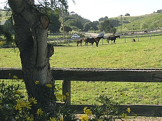 Three adult and two baby horses in a wood-fenced green field, country road and tall hills in the background