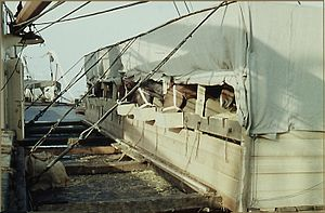 Marine transportation of horses in boxes on the deck of TS Nabob, NDL - 1959.jpg