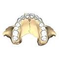 Maxilla close-up inferior.png