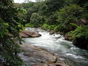 Poonjar - Meenchil river at Poonjar
