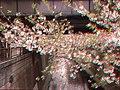Meguro river Sakura blossoms Apr 11 2019 04-28PM anaglyph.jpeg