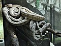Mescoules zoo - Boa arboricole d'Amazonie (2).jpg