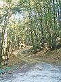 Migliana-paesaggio 9.jpg