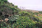 Milagra Ridge 06 (6154644230).jpg