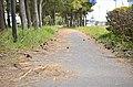 Minatochuo, Oarai, Higashiibaraki District, Ibaraki Prefecture 311-1305, Japan - panoramio (1).jpg