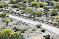Mississippi Guardsmen provide border support 150423-Z-AL584-139.jpg