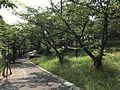 Miwadai Central Park 20170528-2.jpg