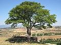 Mogadouro 3 - panoramio.jpg