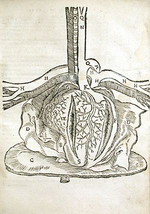 Mondino de Luzzi - Dissection of Heart, from Mondino Dei Luzzi's Anatomia Mundini, Ad Vetustis, 1541