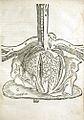 Mondino Dei Luzzi 1541 Heart.jpg