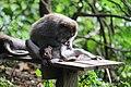 Monkey business at Monkey Forest Park in Ubud, Bali.jpg