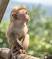 Monkey dreaming.jpg
