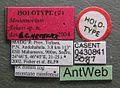 Monomorium fisheri casent0430841 label 1.jpg