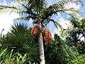 Monte Palace Tropical Garden, Funchal - 2012-10-26 (23).jpg