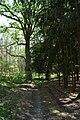 Monumentalne drzewa - panoramio.jpg