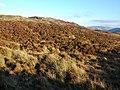Moorland west of An Creachan - geograph.org.uk - 1096185.jpg