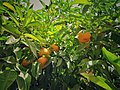 Moroccan Orange.jpg