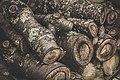 Mossy log pile (Unsplash).jpg