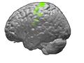 Motor cortex.PNG