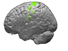 Left motor cortex highlighted on the brain