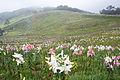 Mount Hakodate Shiga Pref01n.jpg